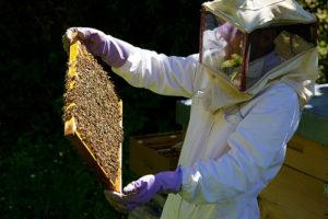 Beekeeping Basics @ Saguaro Room (125)